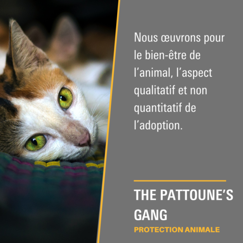 The Pattoune's Gang